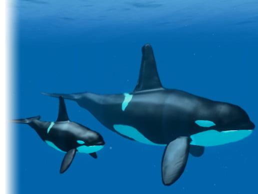 Unity Asset Underwater Animals Pack free download